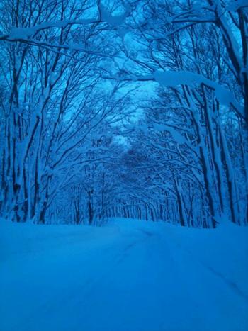 冬ブナ林-3