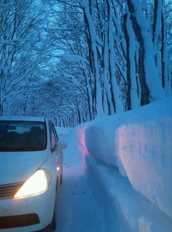 冬ブナ林-1