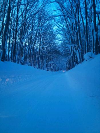 冬ブナ林-2