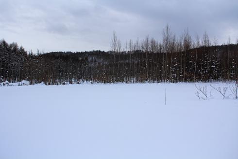 白金の青い池-2