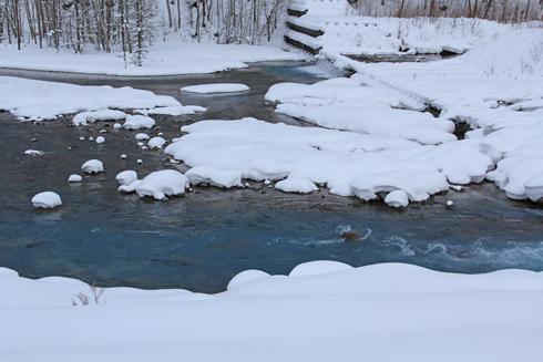 白金の青い池-7