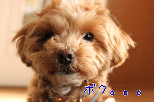 xCPLIquBL9MRWZI-2.jpg