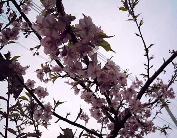 2010-03-05-008.jpg