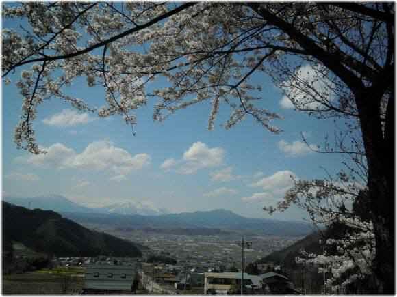 2010 05 04 034-sakura