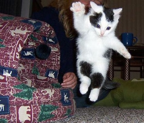 Humorous picture of a flying kitten with one paw out