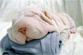 タオル犬」