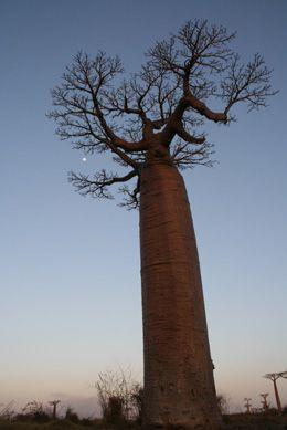 baobab9.jpg