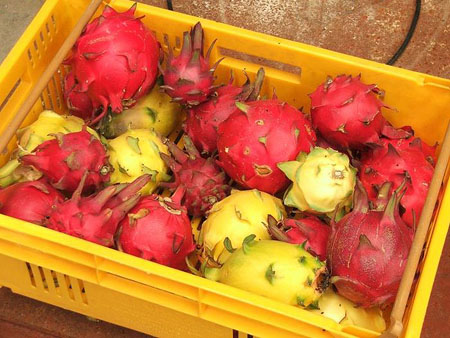 dragon_fruit.jpeg