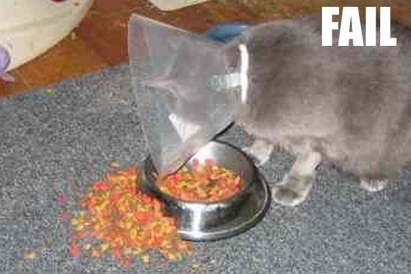 fail-animal-55-600x400.jpeg