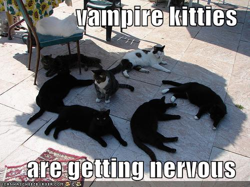 funny-pictures-vampire-cats-shade-sunlight.jpeg