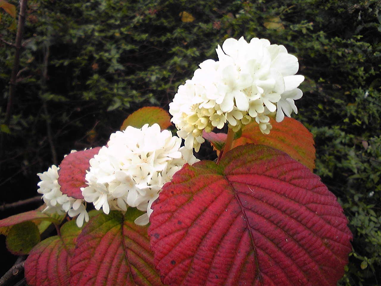 Odemari flowers 2