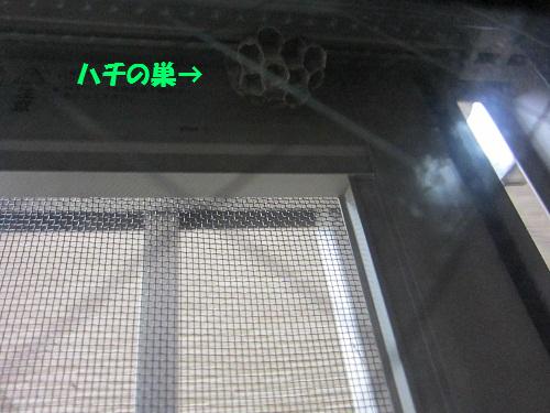 110610001.jpg