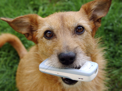 Dog20with20phone.jpg