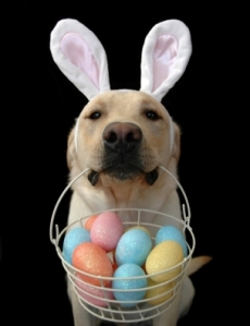 Easter20dog-thumb.jpg
