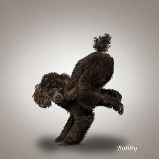 Yoga-dogs-3.jpg