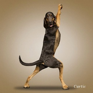 Yoga-dogs-6.jpg