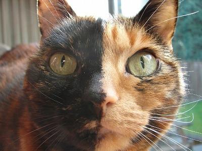 animal-picture-cat-picture-Tjflex2-animalpicture.jpg