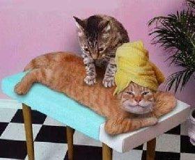 catmassagesn2.jpg