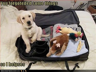 cute-puppy-pictures-forgoteded-helpses.jpg