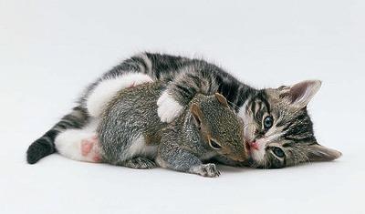 cute_funny_animals_19.jpg