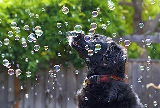 dog-w-bubbles.jpg