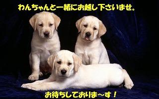 dog_labrador.jpg