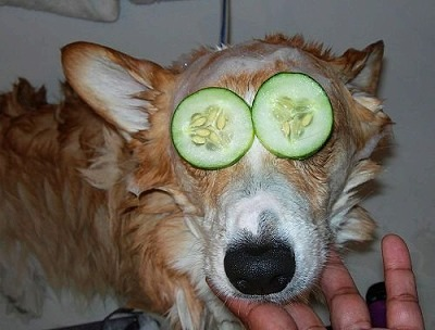 dogs007.jpg