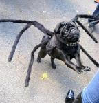 draft_lens2163276module11395676photo_1220855711tarantula_dog.jpg