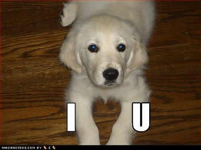 funny-dog-pictures-1-u.jpg