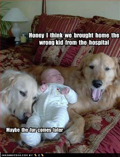 funny-dog-pictures-wrong-kid.jpg