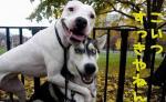 funny-dogs.jpg