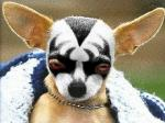 gene-simmons-dog.jpg