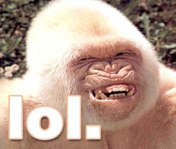 lol-monkey.jpg