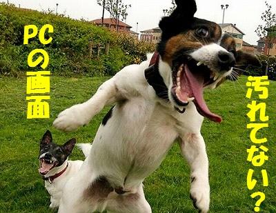 love-the-animals-2.jpg