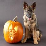 pumpkinpooches-thumb-300x300-19249.jpg