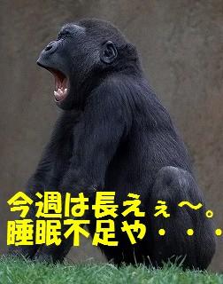 yawnss.jpg
