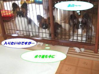 10-01_20081213193532.jpg