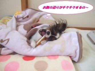10-04_20081213193607.jpg