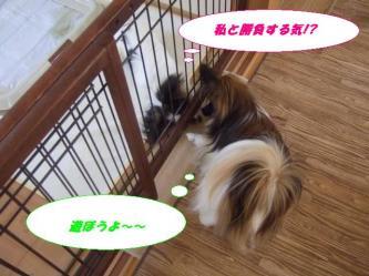 10-07_20081213193638.jpg