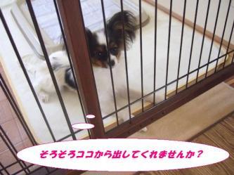 10-08_20081213193648.jpg