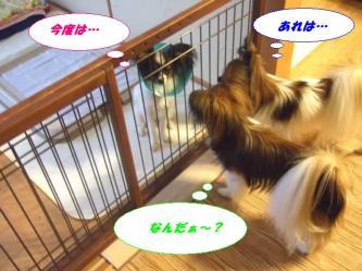 10-09_20081213193659.jpg