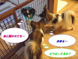 10-10_20081213193709.jpg
