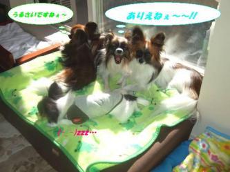 12-04_20081125081034.jpg
