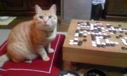 碁をする猫