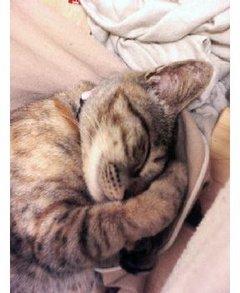 ムームー爆睡
