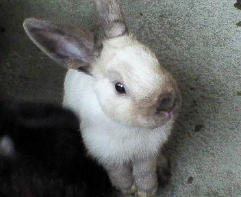 軽井沢旅行のウサギ