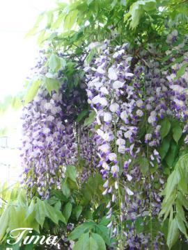 huji_convert_20090512210622.jpg