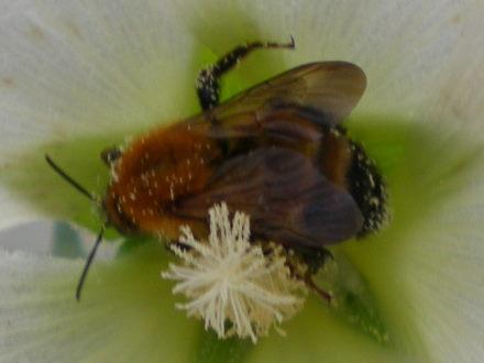 ハチ616
