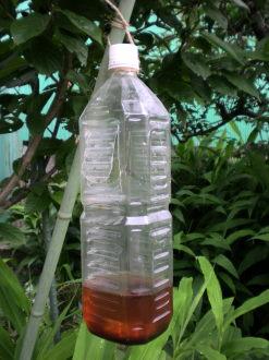 激甘梅酒トラップ