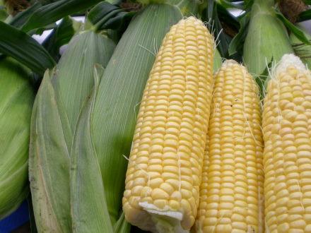 トウモロコシ711